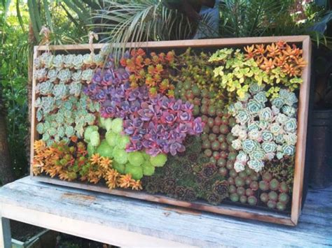 Vertical Garden Succulent Wall Panels by Cool Diy Green Living Wall Projects For Your Home