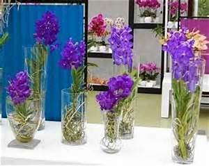 50 Best Images About Water Culture Orchids On Pinterest