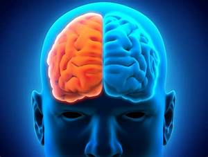 The Brain: Left and Right Hemispheres - HealthfactsNG