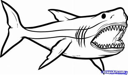 Shark Cliparts Draw Step Drawing Coloring Pages