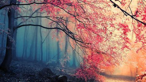 h el avec dans la chambre beautiful forest wallpapers wallpaper cave