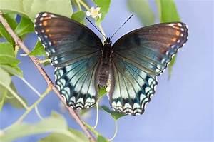 Avenger blog: Purple Butterfly  Purple