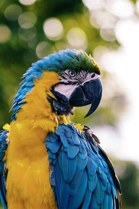Colorful bird hd wide wallpaper for widescreen (25 wallpapers). Free Images : bird, wing, animal, wildlife, green, beak, blue, colorful, fauna, lorikeet, macaw ...