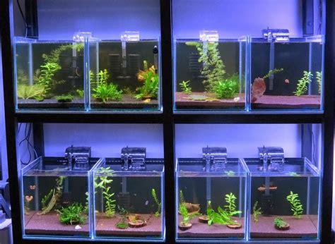 betta fish partitioned betta fish tank setup