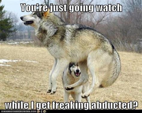 man humor animals beautiful wolves wolf