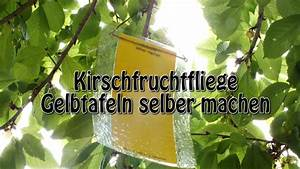 Selber Videos Machen : gelbtafeln gegen kirschfruchtfliegen selber machen youtube ~ Watch28wear.com Haus und Dekorationen