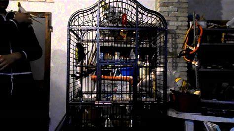 gabbia per pappagalli usata la gabbia giusta per i vostri pappagalli federico