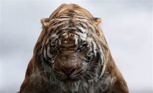 Book A Tiger Com : peta recognizes 39 the jungle book 39 for keeping it unreal ~ Yasmunasinghe.com Haus und Dekorationen