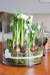 Blumenzwiebeln Im Glas : pin von stephanie geier auf einrichtung pinterest fr hling blume und design ~ Markanthonyermac.com Haus und Dekorationen