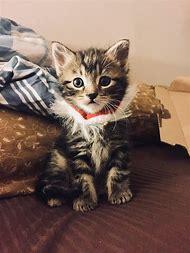 Kitty Cat Man