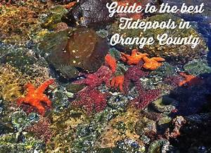 Guide to the Best Tide Pools in Orange County - OC Mom Blog