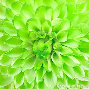Image Gallery lime green backgrounds