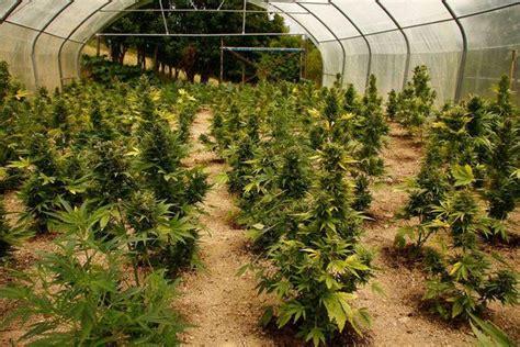 canapé d exterieur comment cultiver vos plantes autofloraison de cannabis en