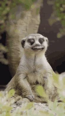 lemur gifs tenor
