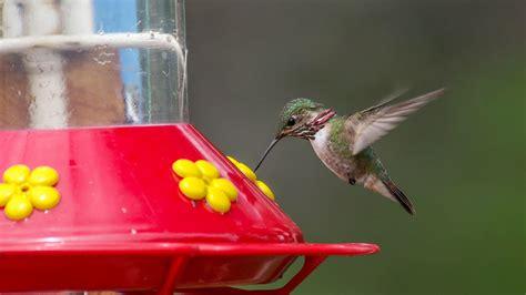 feeding hummingbirds   birds   birds