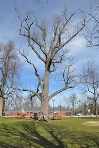 Woodland Park Losing 200