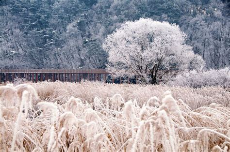 soyang bridge   chuncheon korea cold winter snow