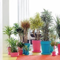 Pflanze Für Dunkle Räume : 11 zimmerpflanzen f r dunkle ecken schattenpflanzen ~ A.2002-acura-tl-radio.info Haus und Dekorationen