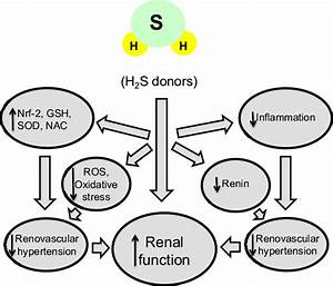 H 2 S Bolsters Endogenous Antioxidant Defense System  Suppresses