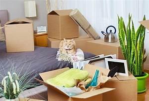 Mit Katze Umziehen : umziehen mit einer katze petshop by duefer ~ Michelbontemps.com Haus und Dekorationen