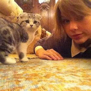Taylor Swift shows off nasty scratch from cat Meredith ...