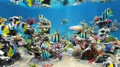 Desktop Aquarium Wallpapers Laptop Sim Windows Wallpapersafari