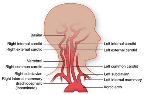 what color is your blood before it hits the air vasculature of the institute