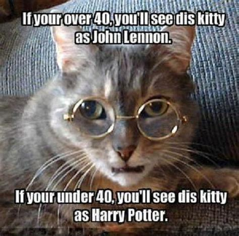 Rip grumpy cat :( memes card game: 28 Hilarious and Funny cat memes that are cute clean laugh so hard