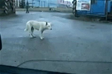 funny cute animated dog gifs   animations