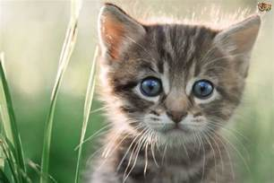 cat free kitten emergencies signs to look out for pets4homes
