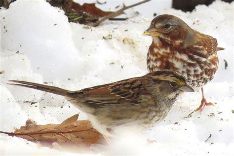 how to set up ground bird feeders