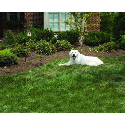systeme anti aboiement exterieur syst 232 me anti aboiement pour l ext 233 rieur pour chien petsafe auberdog