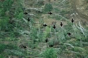 Straight Line Wind Damage vs Tornado