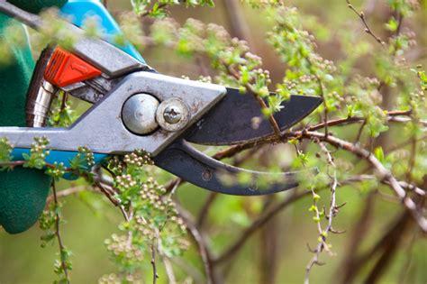 sommerbluehende straeucher schneiden gartenzauber