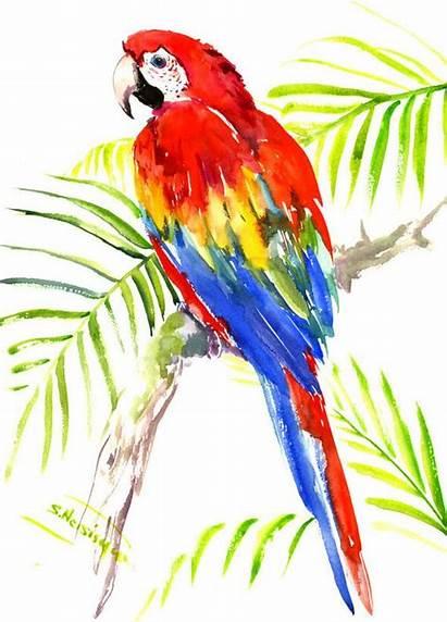 Watercolor Tropical Macaw Bird Painting Scarlet Paintings