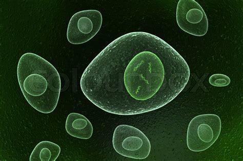 dna nucleus organic cells stock photo colourbox