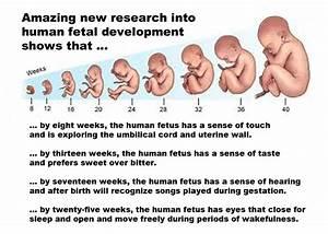 Amazing new research into human fetal development
