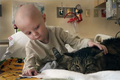 Helping The Little Ones In Need  20 Pictures  Animal's Look