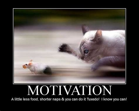cat motivational posters    agree