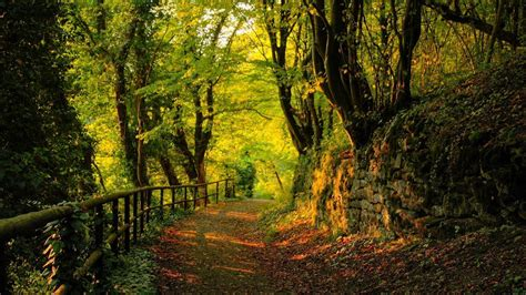 Beautiful Forest Wallpapers  Wallpaper Cave