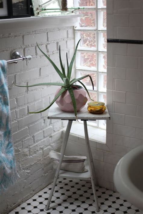 Plants For Bathroom Counter by Best Plants That Suit Your Bathroom Fresh Decor Ideas