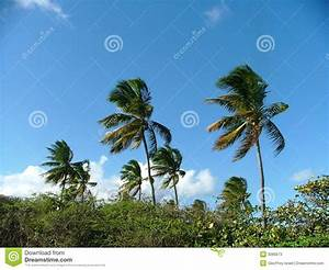 Palm Trees Blowing Stock Photos - Image: 3085673