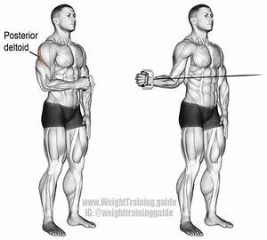 Cable External Shoulder Rotation Guide And Video