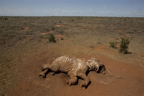sad  cecil  african animals  slaughtered