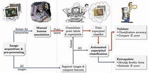 Automated Image Analysis