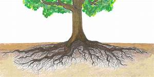 The Dangers Of Root Disturbance