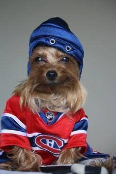 Yorkshire Hockey 172 Best Furry Fans Images On Pinterest Doggies Hockey