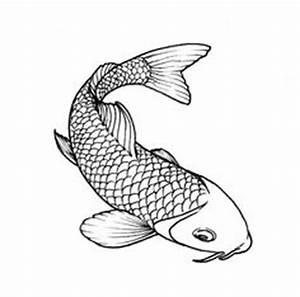 Drawn koi carp logo - Pencil and in color drawn koi carp logo