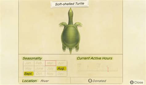 crossing animal turtle horizons shelled soft catch