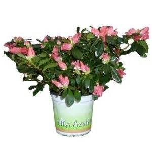 plante de bureau 11 best images about plantes de bureau on